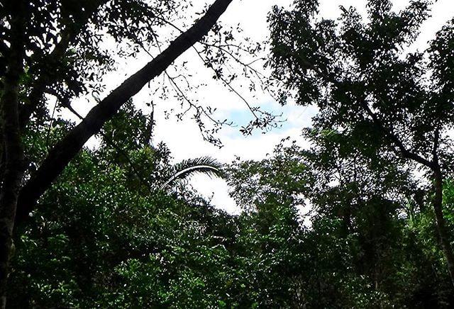 Im Dschungel von Belize