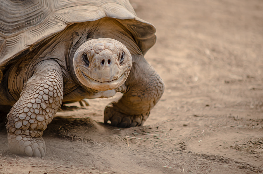 Photograph Smilie Turtle (°182) by Star Lee on 500px