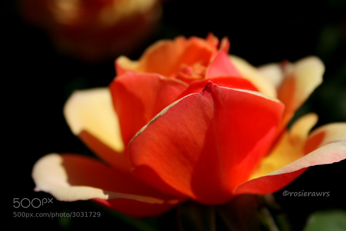 Photograph The Orange One by Rose Williamson on 500px