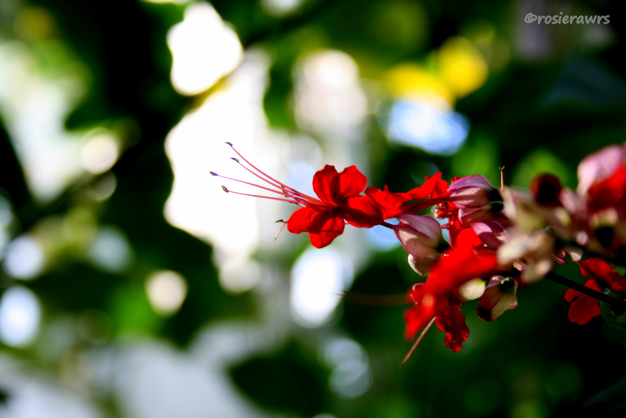 Photograph Botany 2 by Rose Williamson on 500px