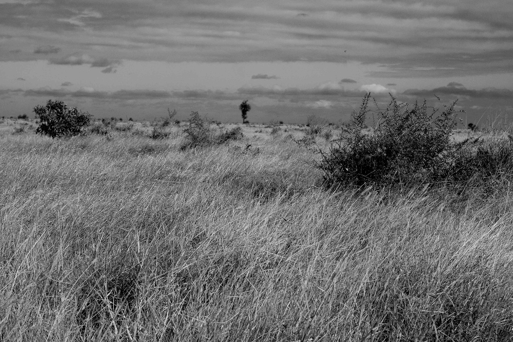 Photograph Moody Kruger Landscape by Nelis Nienaber on 500px
