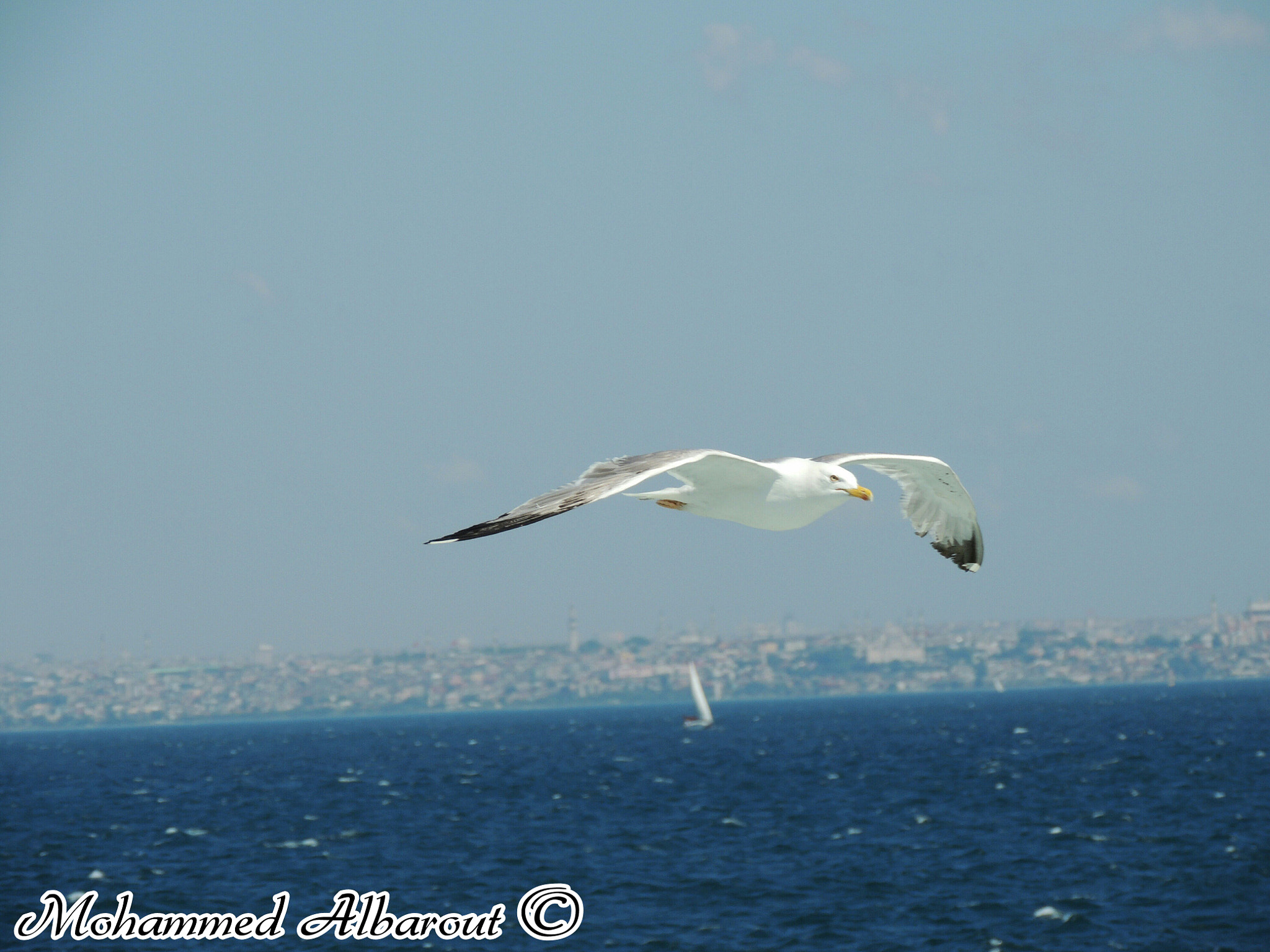 Photograph The sea and Seagull by Mohammed Al-barout on 500px