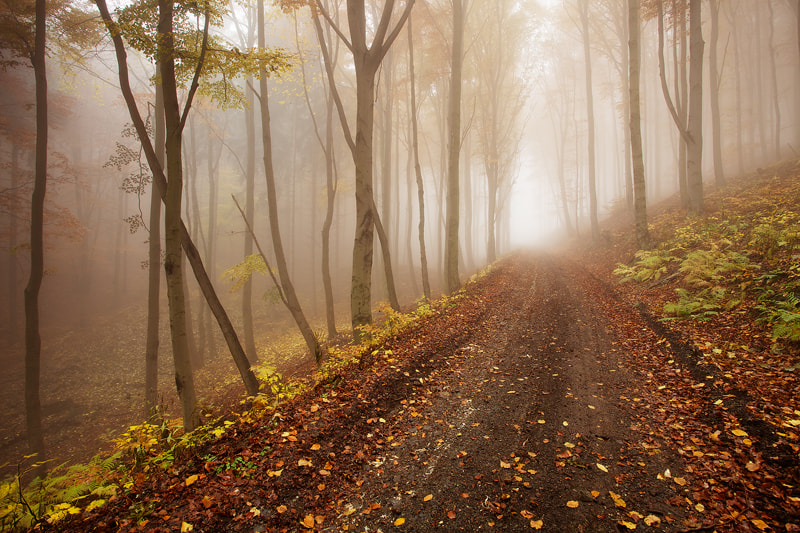 Photograph On the road by Martin Rak on 500px