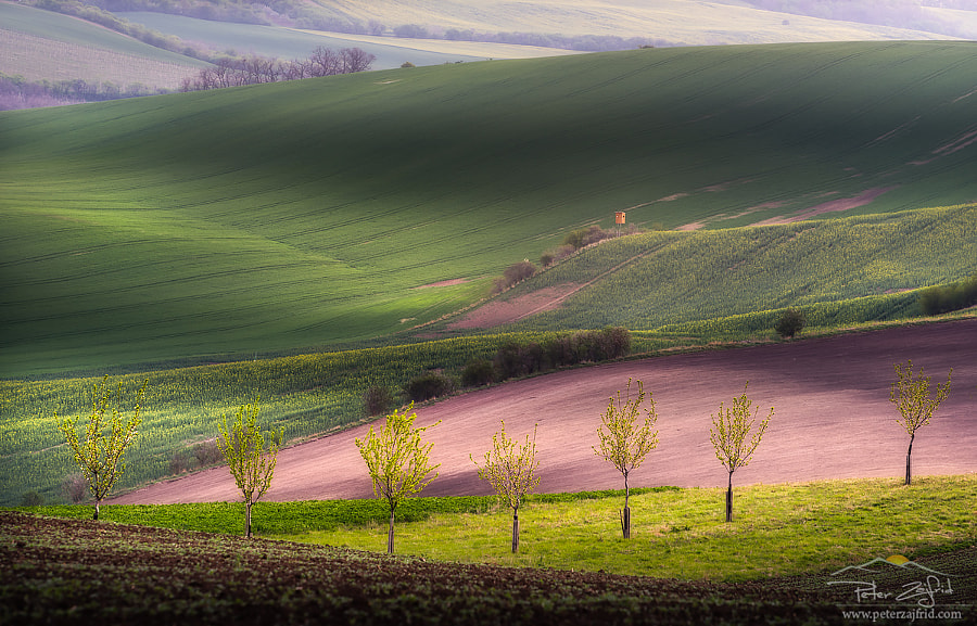 Green fields by Peter Zajfrid on 500px.com