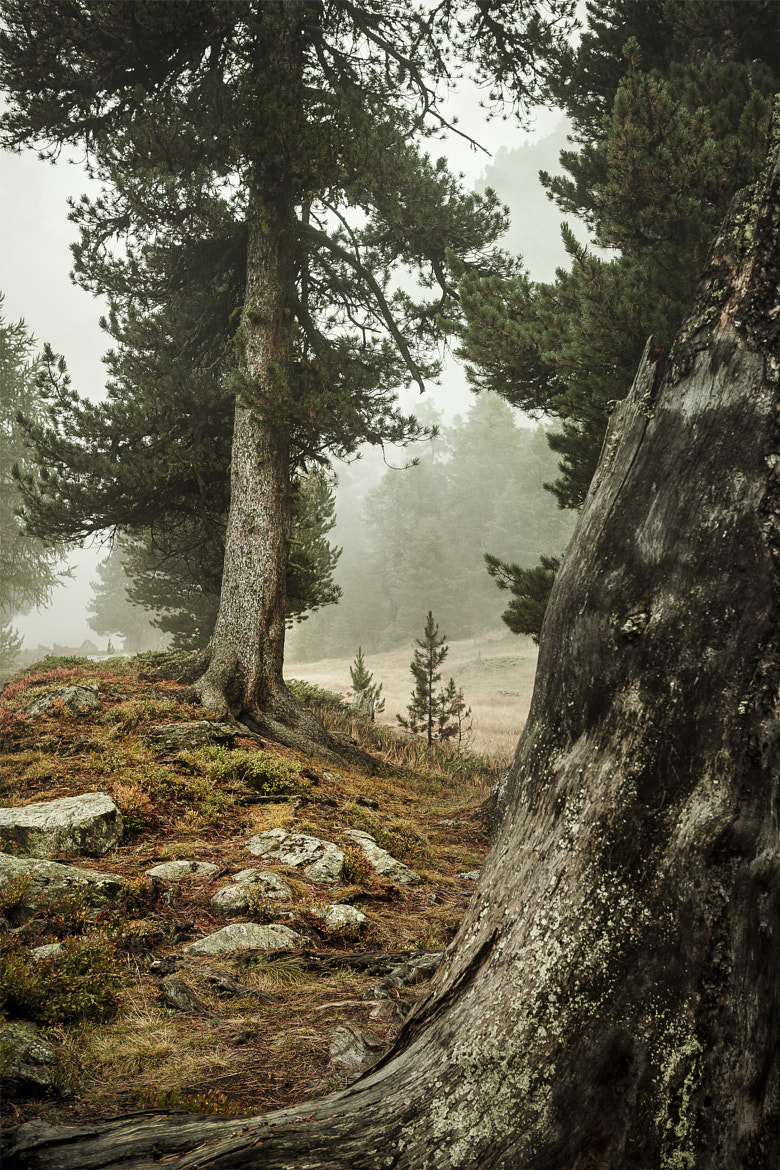 Photograph into the woods by Jean-Pierre Perren on 500px
