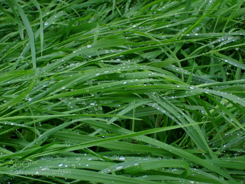 Photograph капли дождя by Виктор Яговитин on 500px