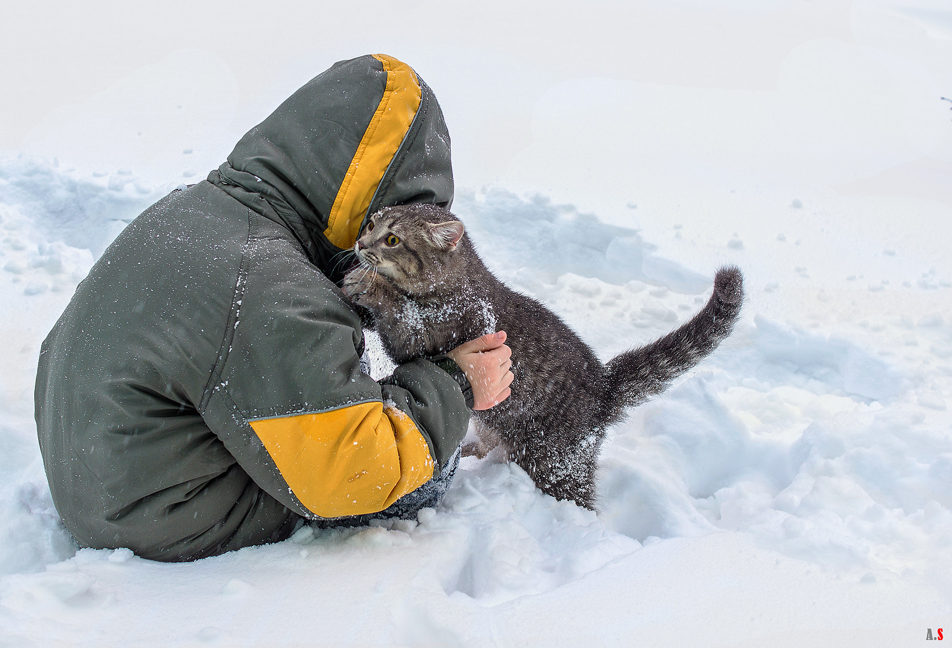 Photograph the cat learned snow for the first time! Ou!) by Alexey Stavcev on 500px