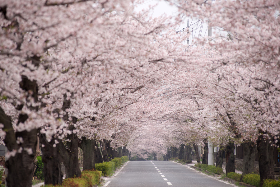 tunnel of flowers by Tedd Okano on 500px.com