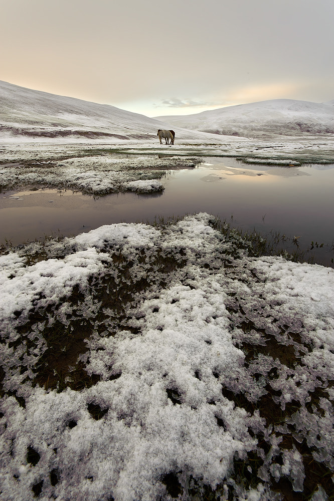 Photograph Snow ponies by Hillary Younger on 500px