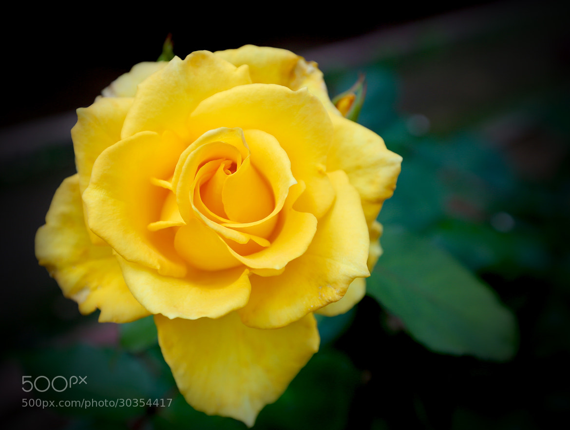 Photograph Yellow by Amata Tarkmar on 500px
