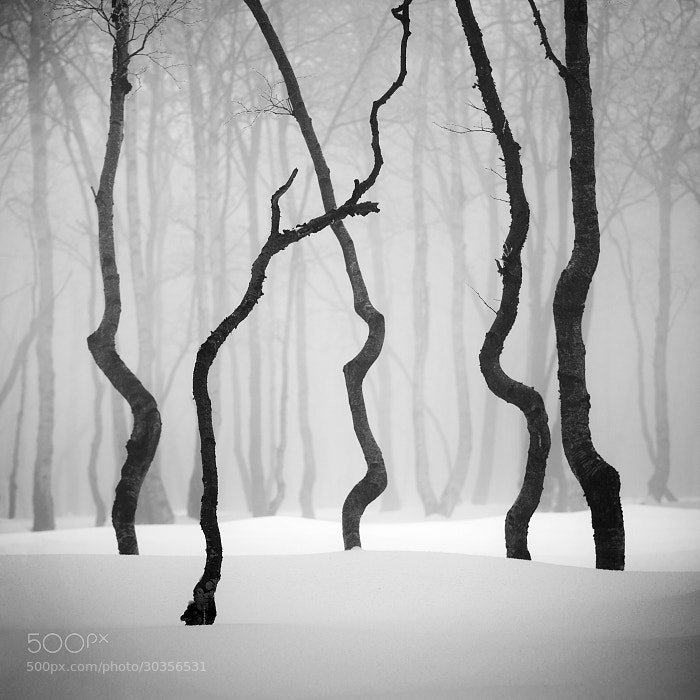 Photograph Winter in the Ore mountains II by Daniel Řeřicha on 500px