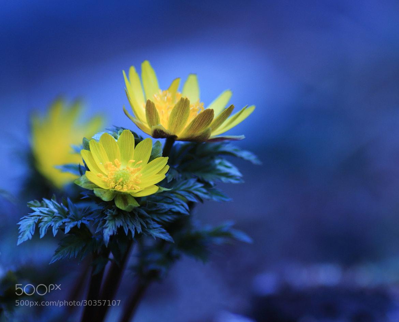 Photograph Spring Messenger by Shihya Kowatari on 500px