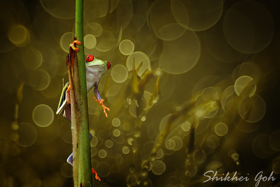 Photograph Red Eyes by shikhei goh on 500px