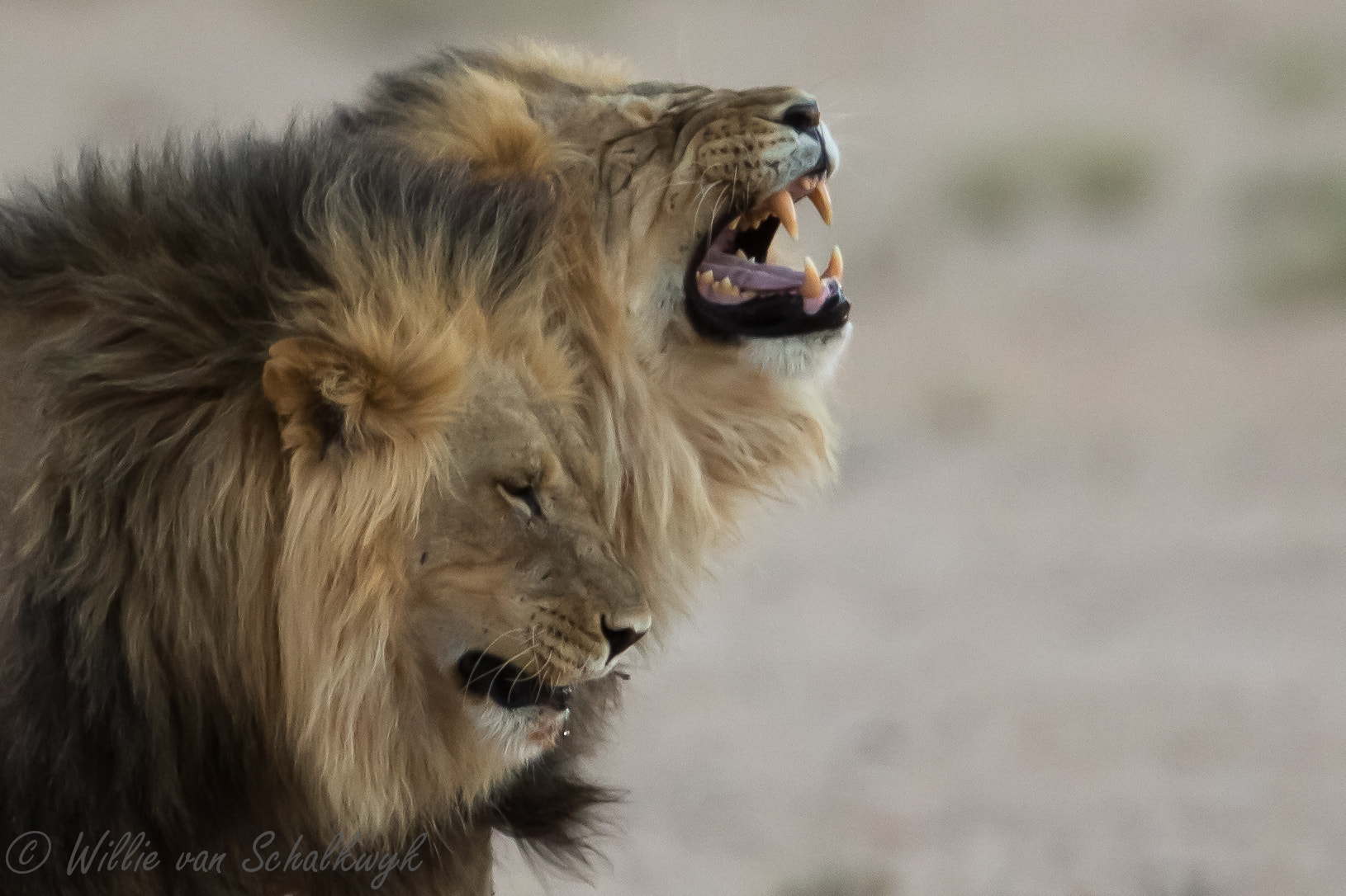 Photograph Twin Kings by Willie van Schalkwyk on 500px