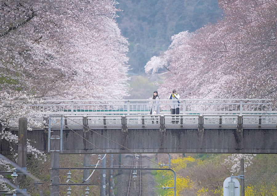 Overpass surrounded by cherry blossoms by yoshitaka ooyama y's photo Japan on 500px.com