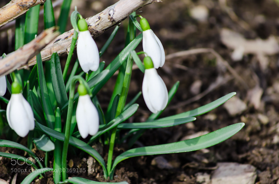 Photograph spring is comming by Gunter Werner on 500px