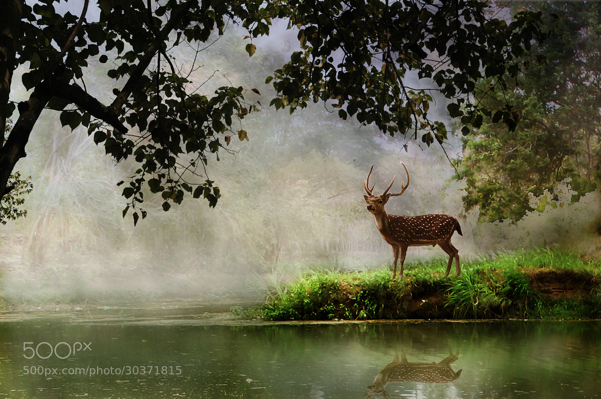 Photograph Deer - #3 by 3 Joko on 500px