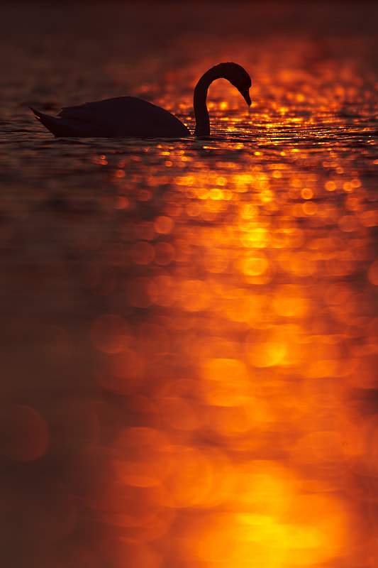 Photograph Last few minutes of the day by René Visser on 500px