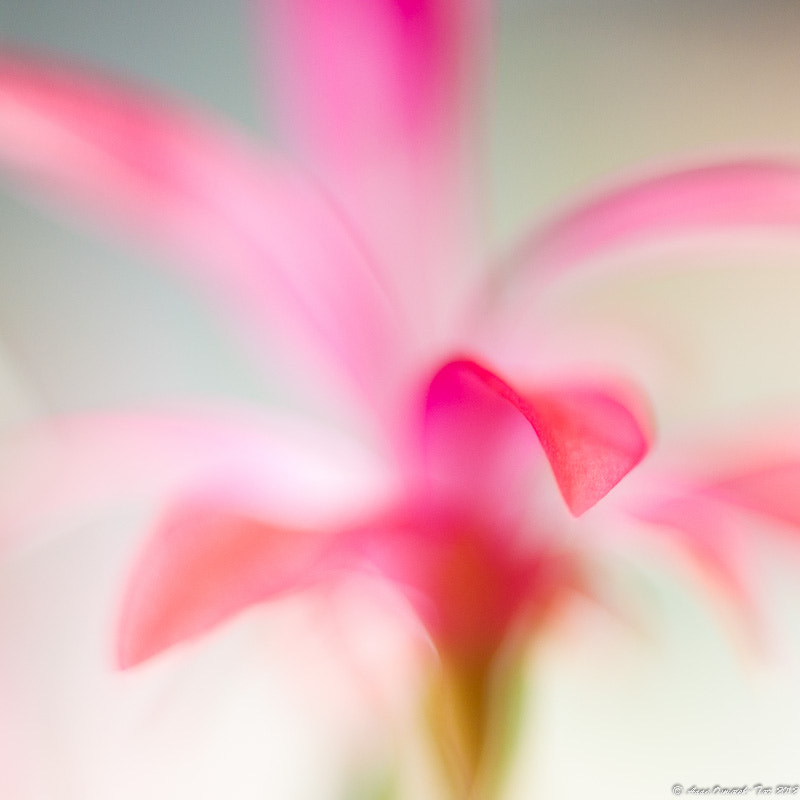 Photograph Delicate Touch by Anna Omiotek-Tott on 500px