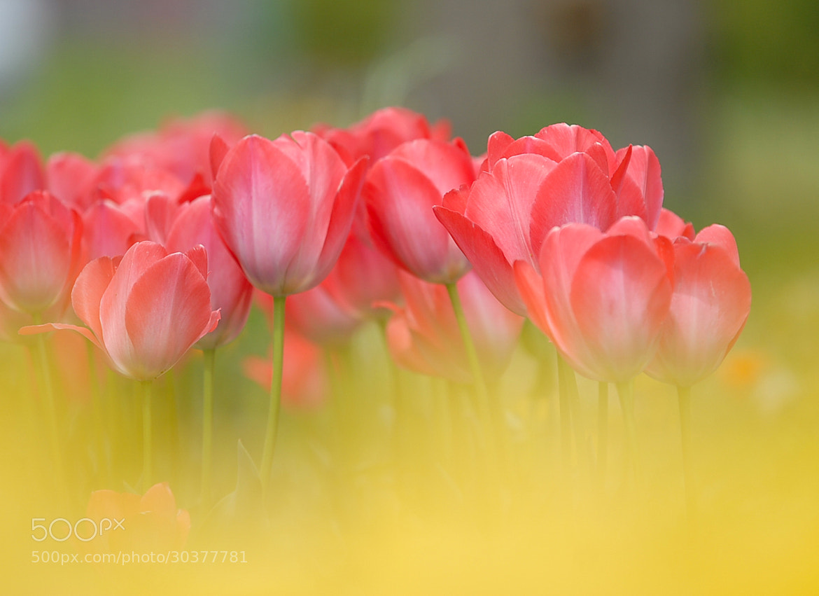 Photograph Colors of spring by kazumi Ishikawa on 500px
