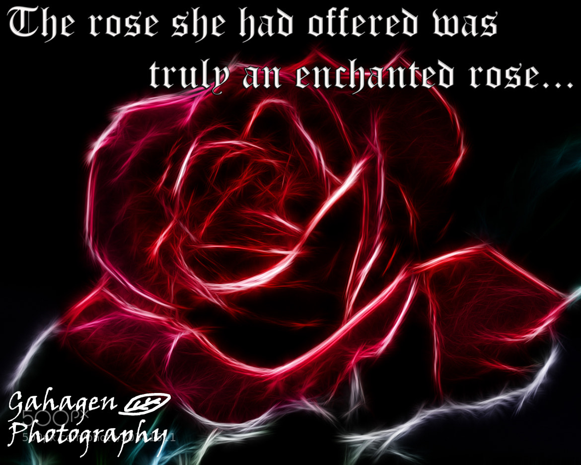 Photograph Beauty and the Beast rose quote by Ben Gahagen on 500px