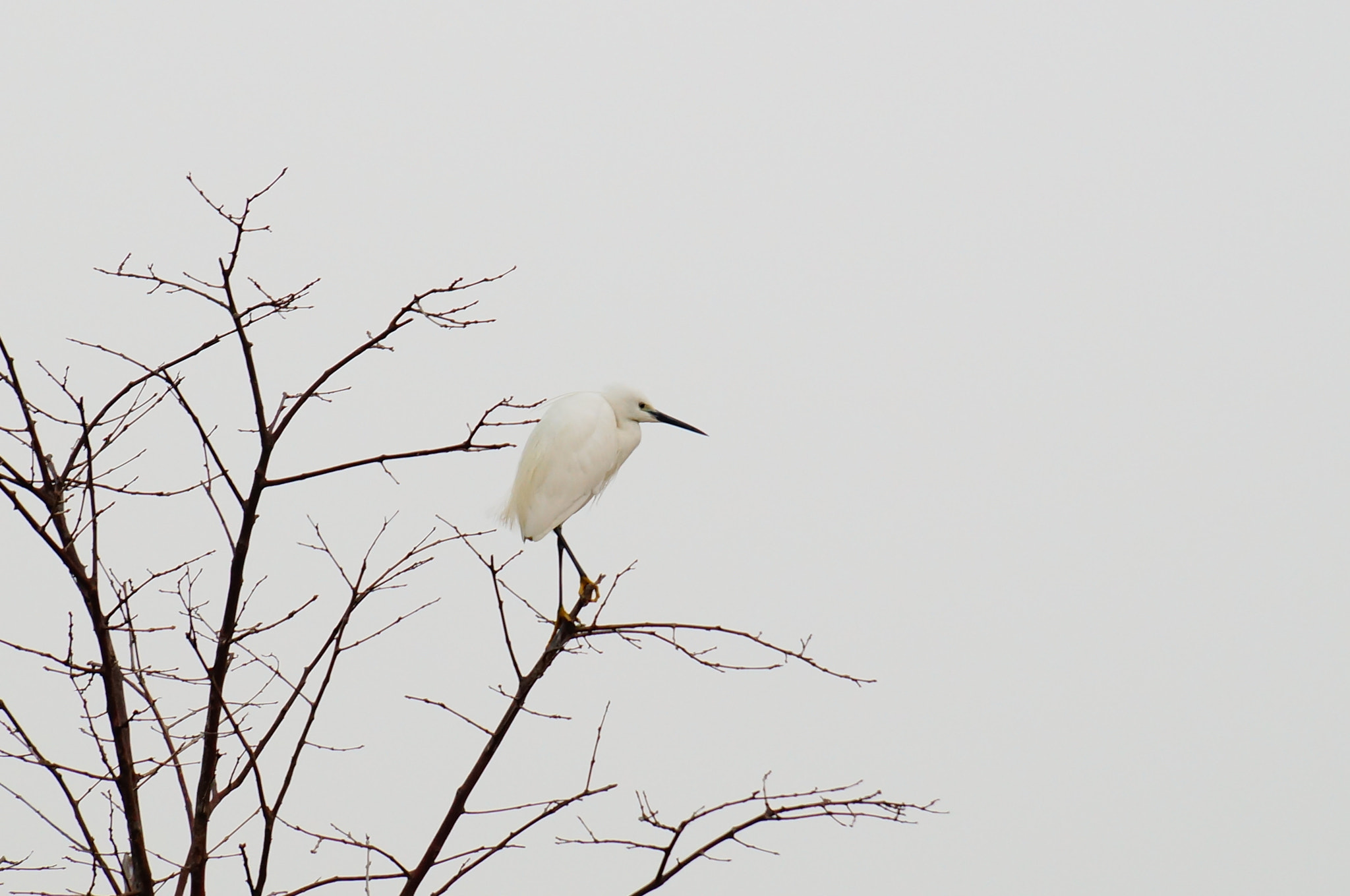 Photograph lonely bird by march SYL on 500px