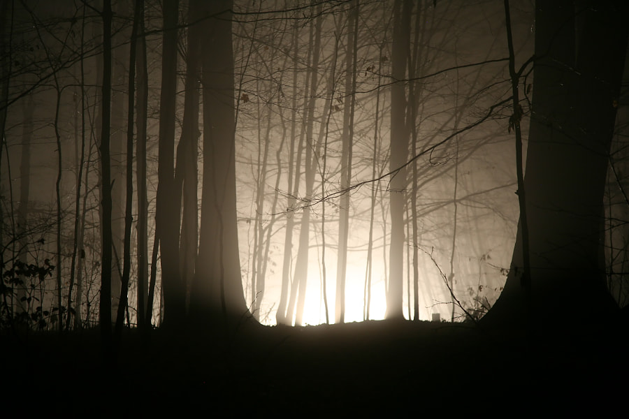 Taken in November 2006. It was an extremely foggy night, and there is a road that runs between the forest. The lights are those of an oncoming car.
