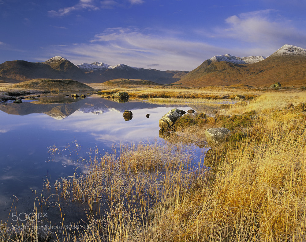 Photograph Rannoch Gold by Ian Cameron on 500px