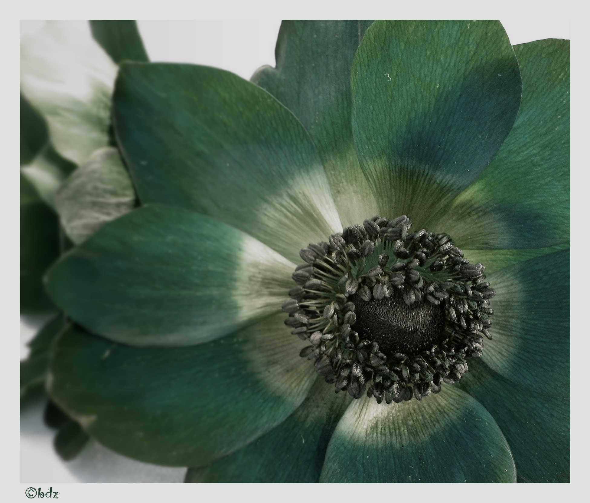 Photograph call me emerald ... by Betty Ditscheid-Zweers on 500px