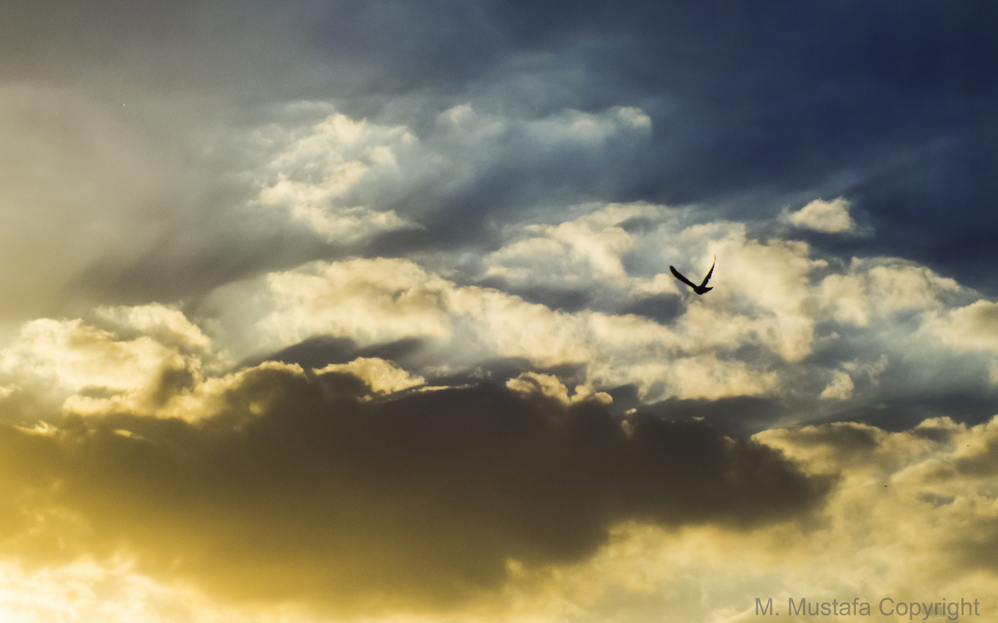 Photograph Bird flying away by Mohamed Mustafa on 500px
