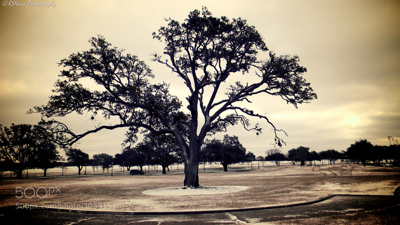 Photograph Tree by Ricardo S. Nava on 500px