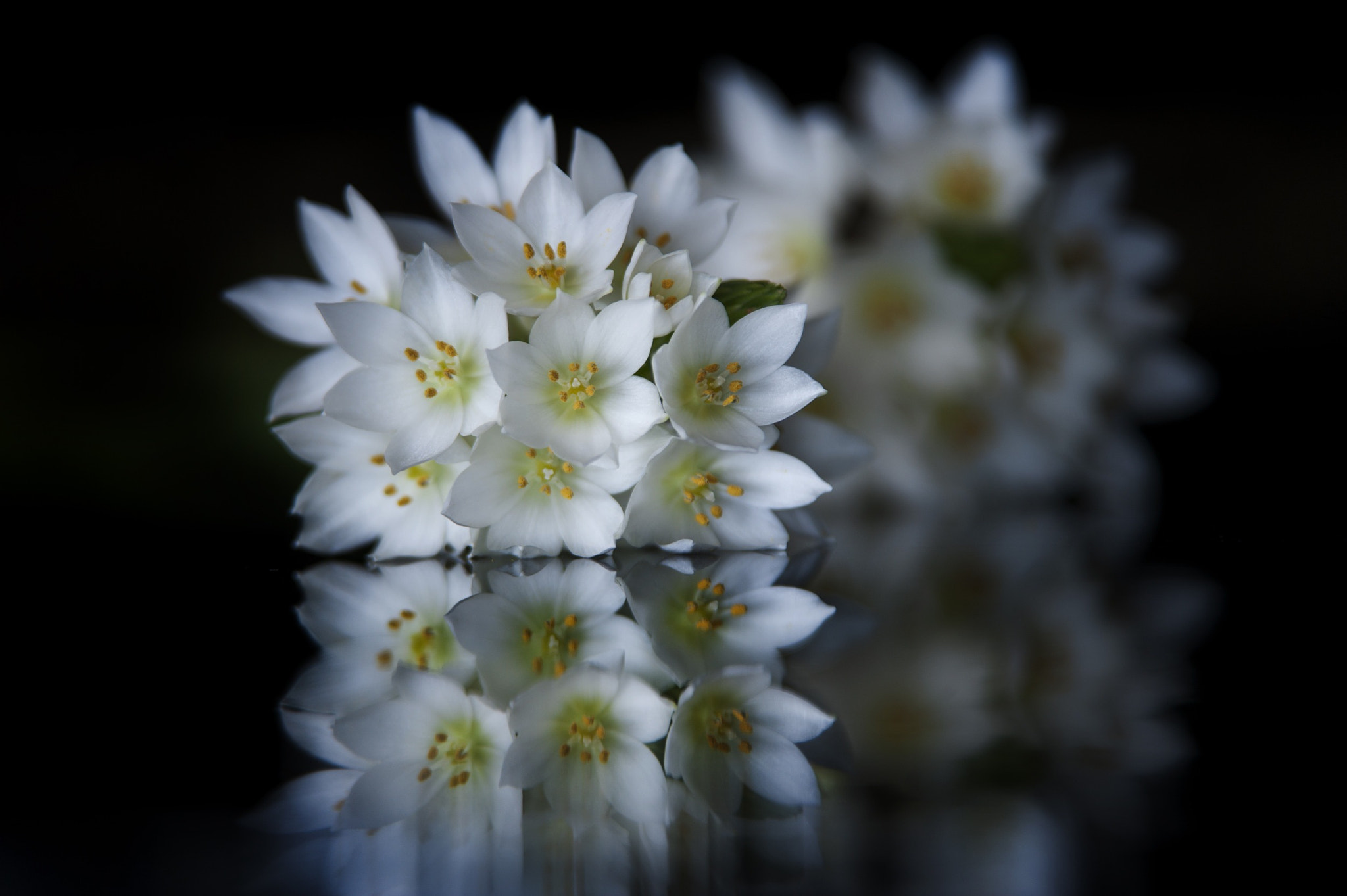 Photograph White flowers and reflections by Cristobal Garciaferro Rubio on 500px