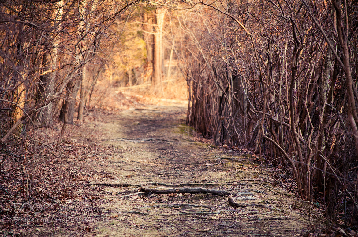 Photograph A bump in the path by Lee Costa on 500px