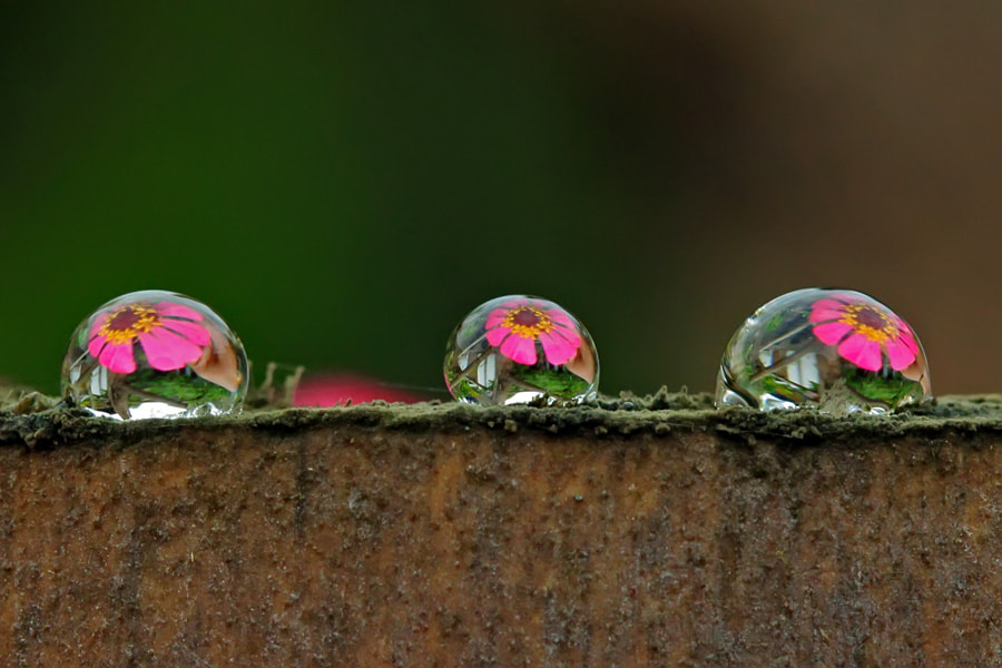 Photograph the beauty dews on the dirty bamboo by teguh santosa on 500px