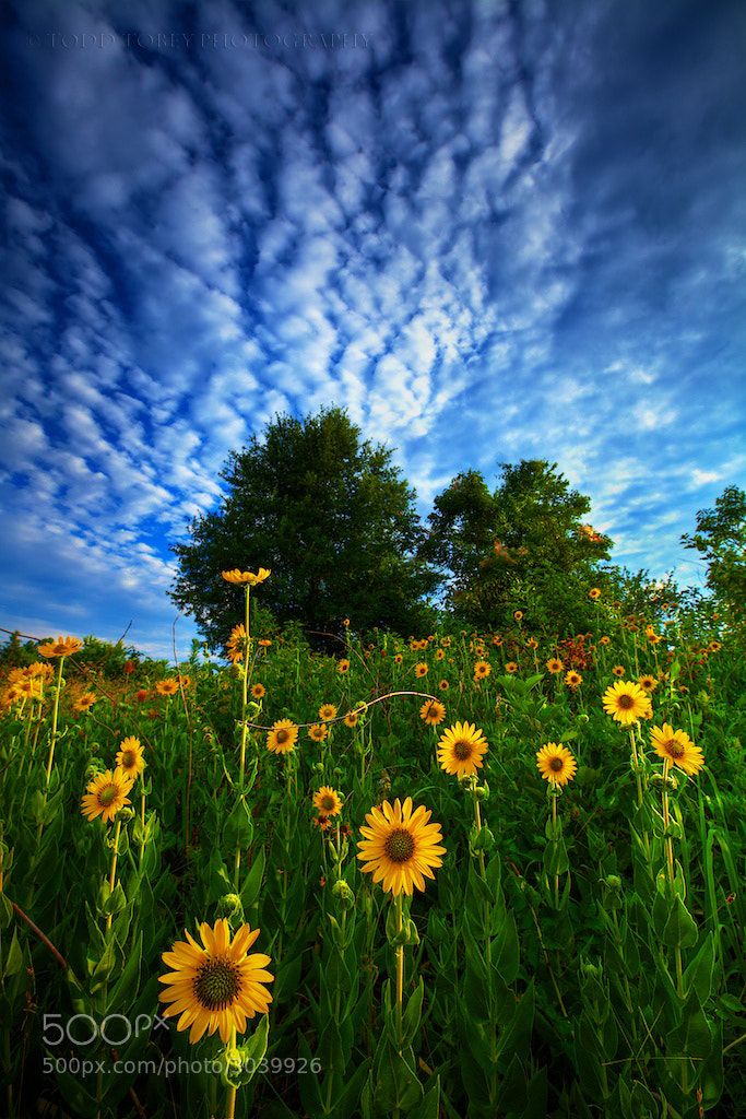 Photograph Reaching for the Sun by Todd Tobey on 500px