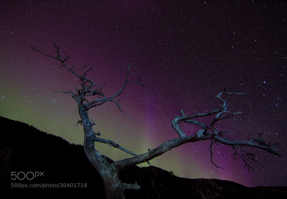 Photograph Dead tree under nightsky by Chris-André Paulsen on 500px