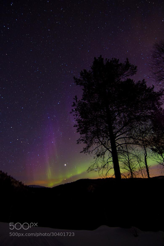 Photograph Aurora  Russånes by Chris-André Paulsen on 500px