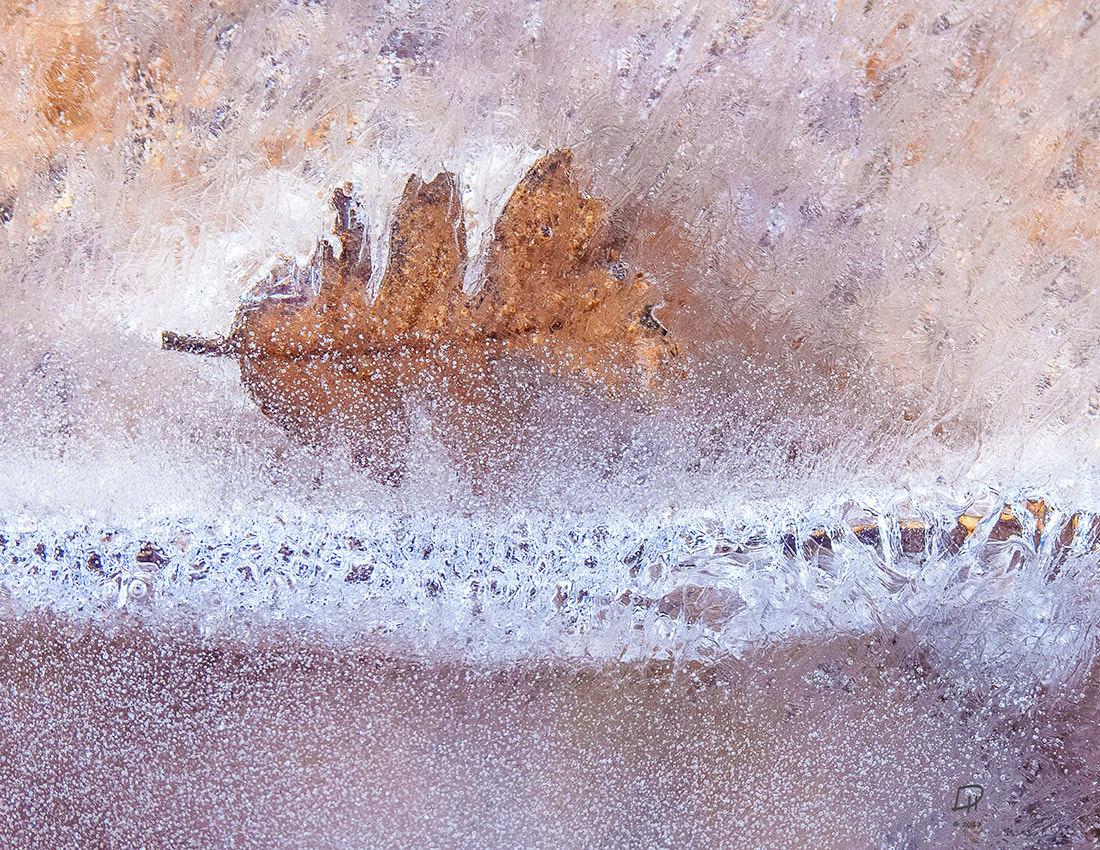 Photograph LEFT IN THE ICE by Deborah Hughes on 500px