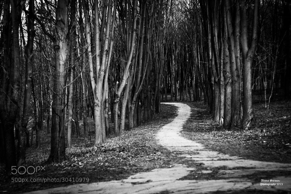 Photograph Path by Aliona Sorocov on 500px