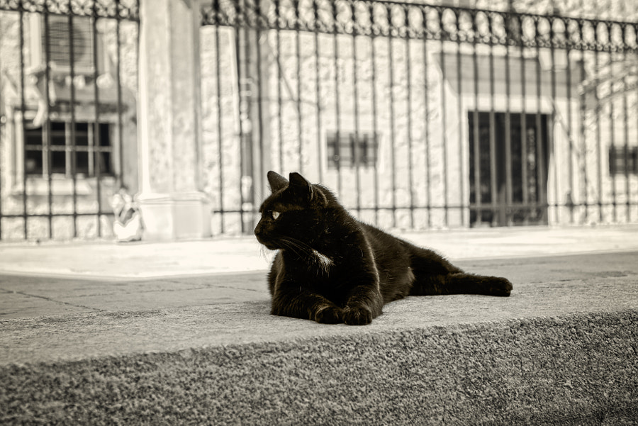 Black cats - Alley Panther by Bojan Bilas on 500px.com