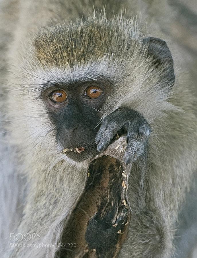 Taken in Katavi, Tanzania