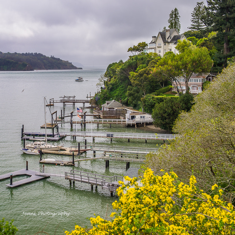 Photograph Spring in Bay by Jean Li on 500px