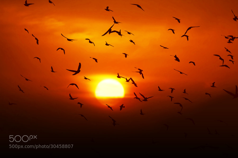 Photograph Gone With The Sun by Mostafa Ammar on 500px