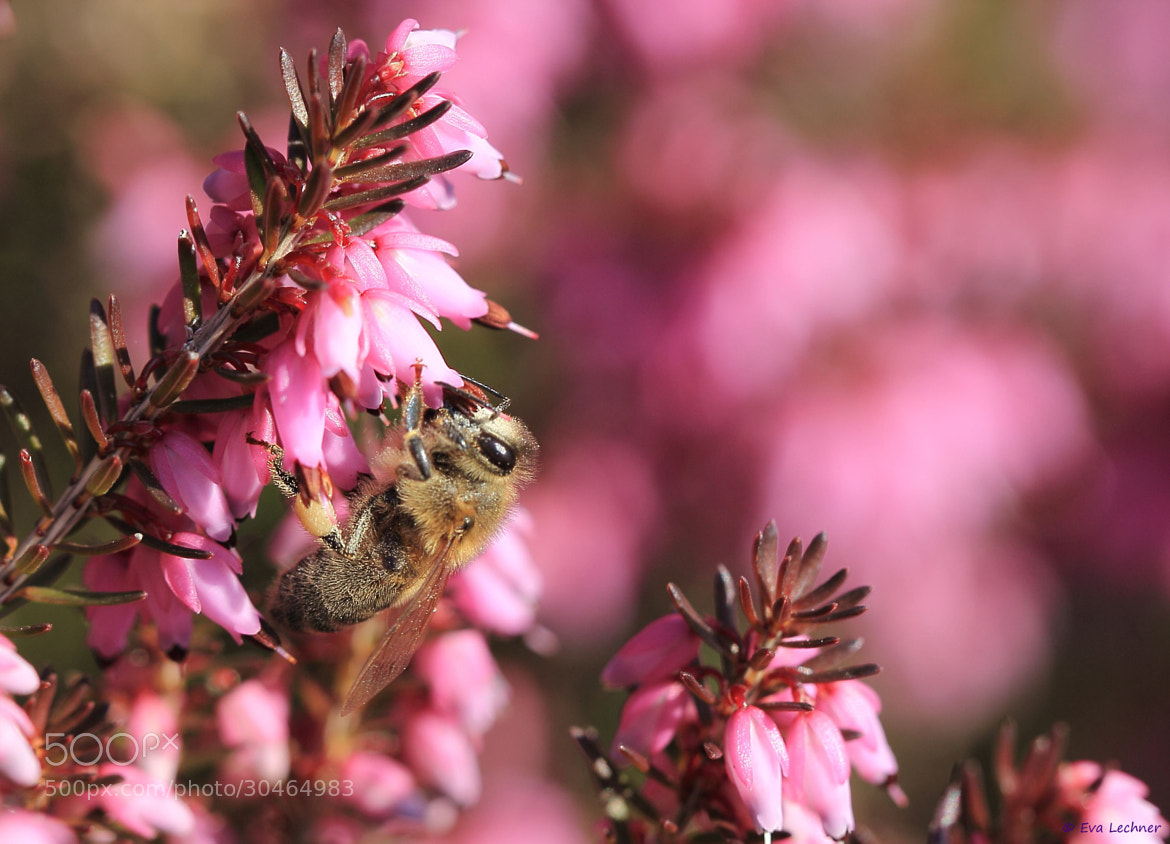 Photograph Erica & Bee by Eva Lechner on 500px