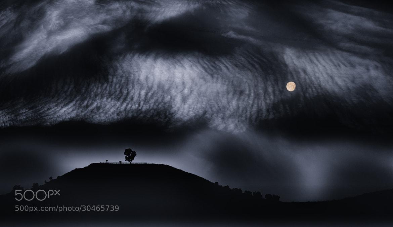 Photograph Moon and Tree by Hani Latif Zaloum on 500px