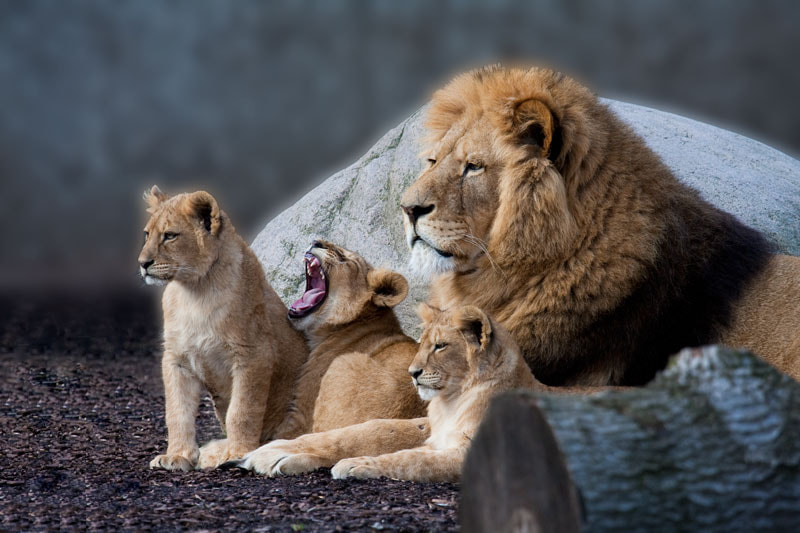 Photograph Proud father by Susie Knudsen on 500px