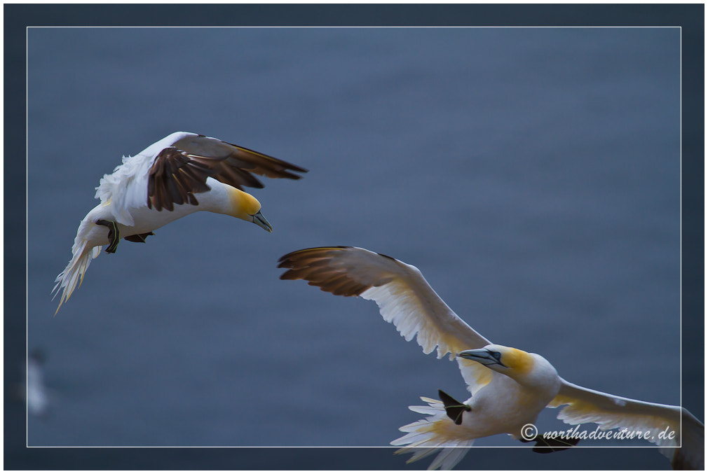 Photograph Battle in the air by Sandy Lupu on 500px