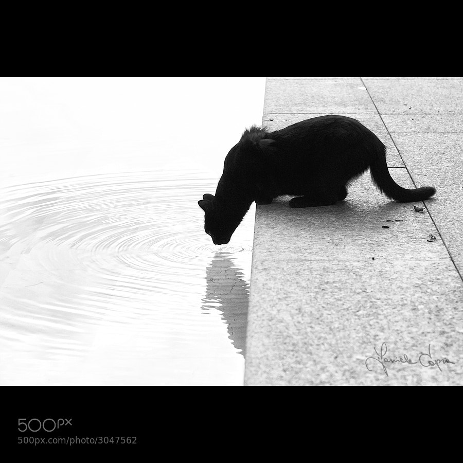 Photograph let your black dive into white by Daniele Capra on 500px