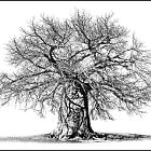 Tshwagong Baobab - The Hiding Place