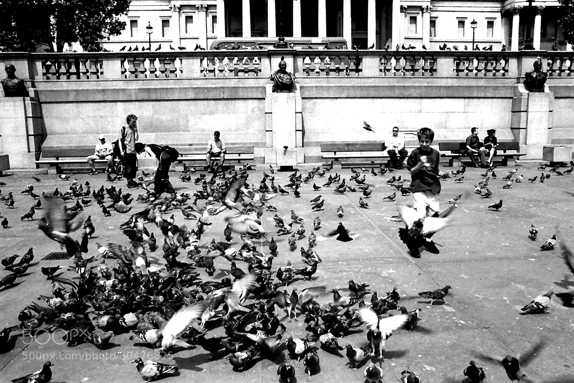 Photograph The child flock of pigeons ... by Sébastien Risse on 500px